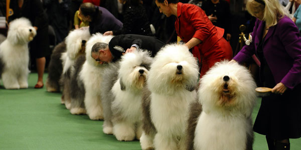 Different dogs joining a dog show