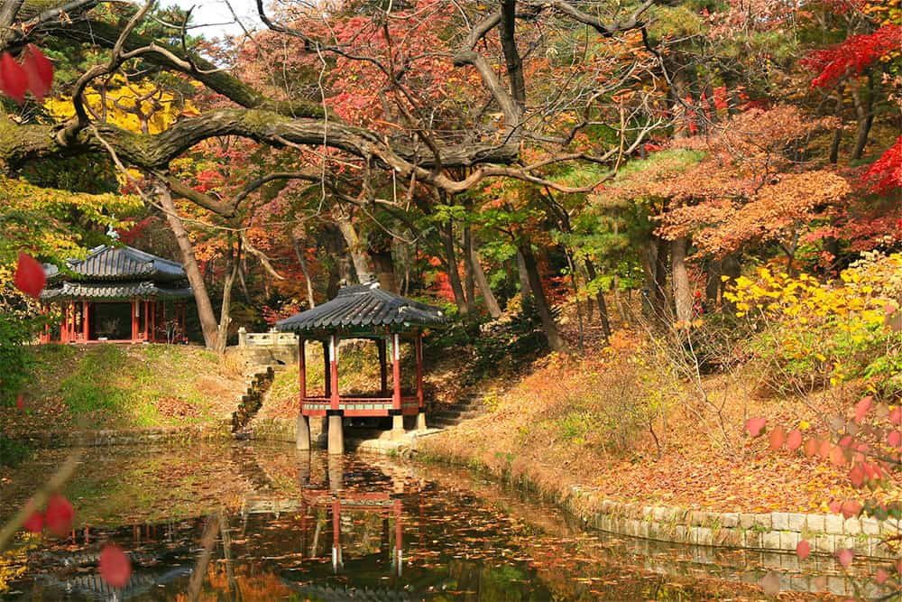 beautiful changdeokgung secret gardens