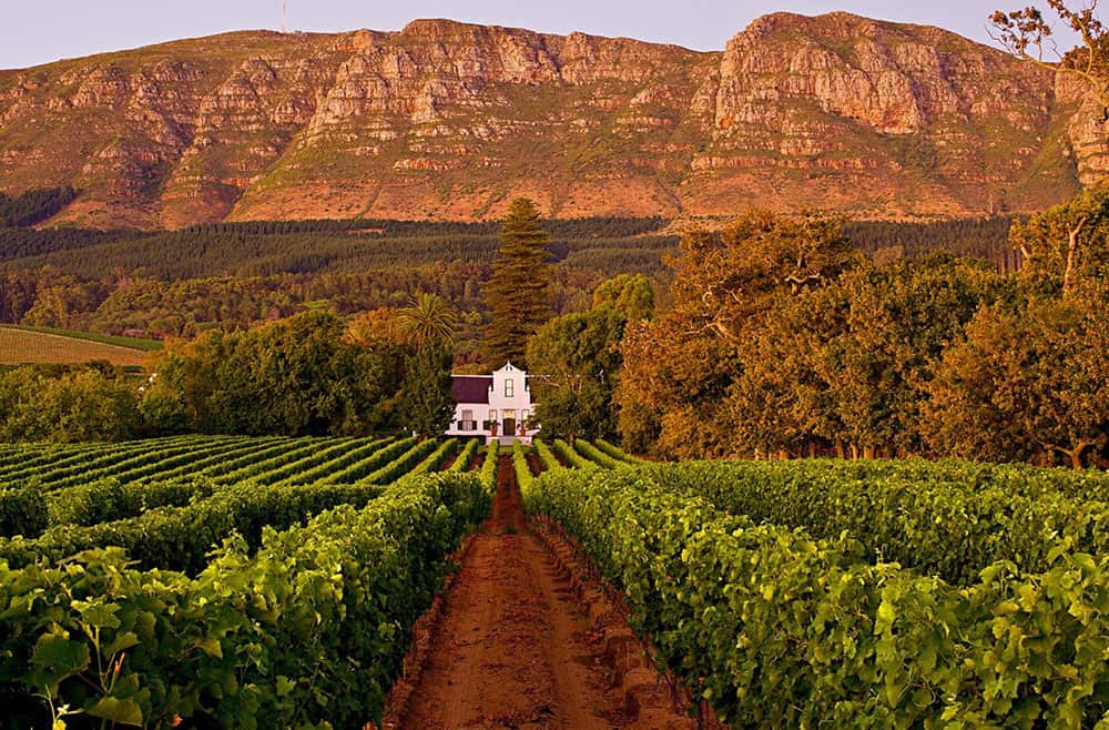 the wine country Cape Town